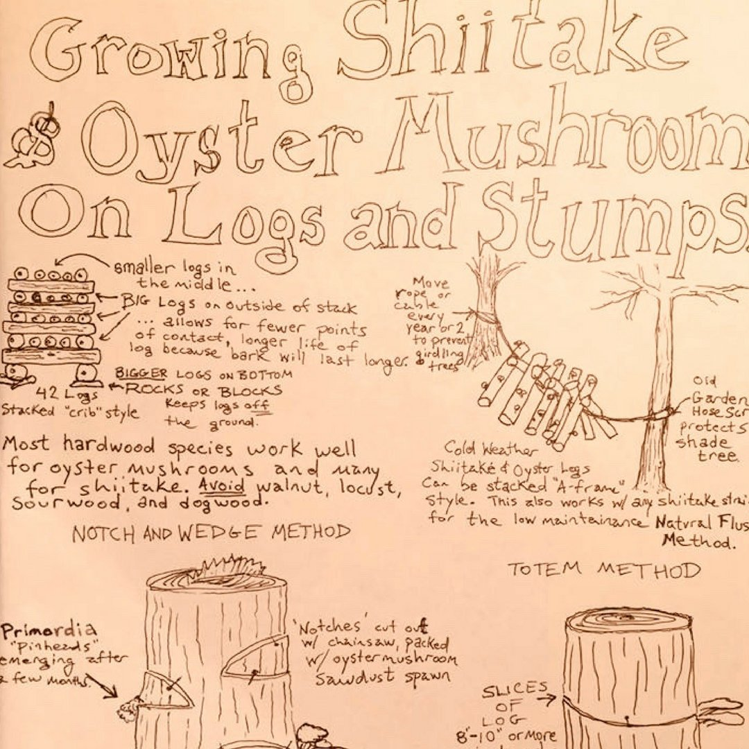 Medicinal Mushrooms & Shiitake Log Inoculation