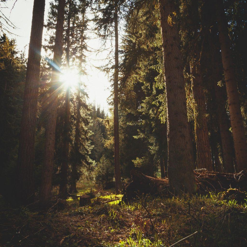 Harvesting Medicinal Tree Barks